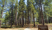 2838 Springwood Upper Truckee Marsh
