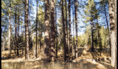 973 Silverwood Forest View