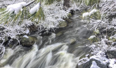 994-Ermine-Winter-river