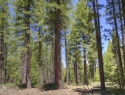 pioneer-trail-forest-view