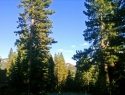 pioneer-trail-forest-views