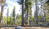 tahoe-paradise-forest-2