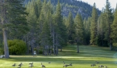 tahoe-paradise-golf-course